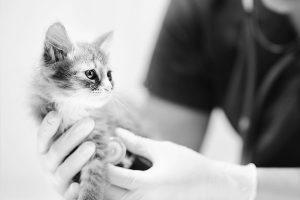 Background kitten checkup bw 300x200 - Background_kitten-checkup_b&w