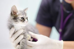 Background kitten checkup color 300x200 - Background_kitten-checkup_color