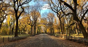 Park in autumn 300x162 - Park-in-autumn