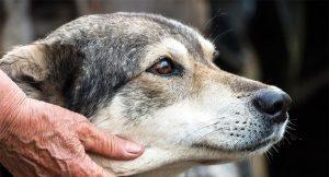 fetch the vet hospice 1 300x162 - fetch-the-vet-hospice-1