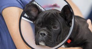 fetch the vet surgery 300x162 - fetch-the-vet-surgery